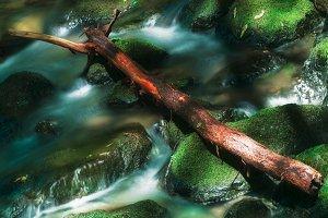 Creek in Muir Woods