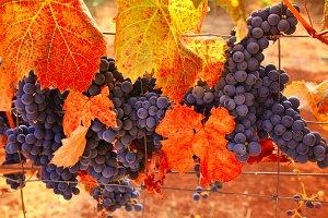 Fall Wine Bounty