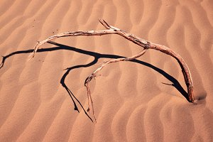 Isolated Dry Twig in the Sand