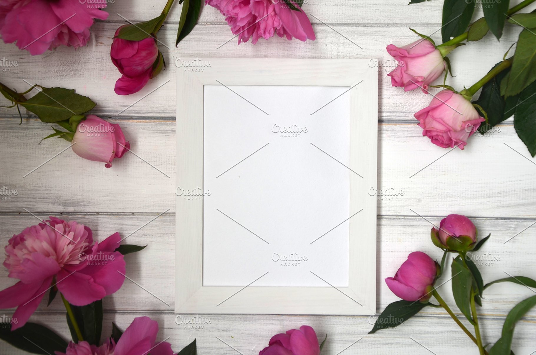 Stunning pink peonies on white rustic wooden background  Copy space  White  frame for picture or photo