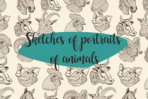 11 sketches. Portraits of animals