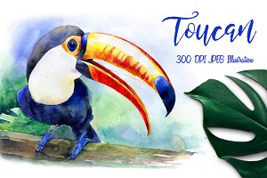 SALE! Toucan watercolor illustration
