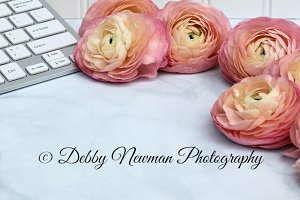 Coral Ranunculus Workspace - Square