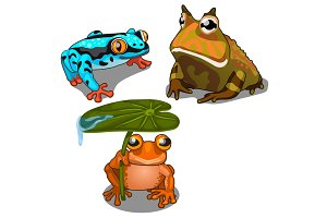 Set of three toads, different colors