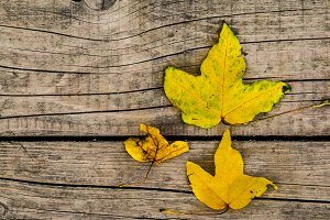 autumn leaf on the background of wooden boards