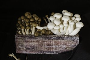 white and brown Chinese mushrooms on a wooden background, selective focus