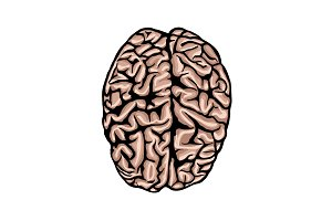 Hand-drawn colored brain.