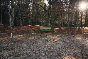 Bench in the Forest with at Sunrise