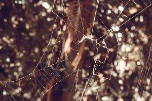Spider's Delight