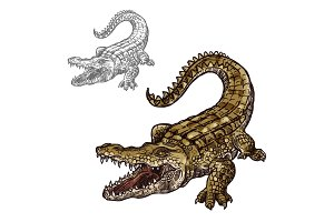 Crocodile alligator vector isolated sketch icon