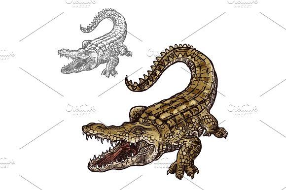 Crocodile Alligator Vector Isolated Sketch Icon