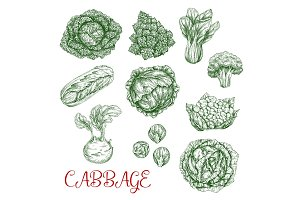 Cabbage vector sketch icons of vegetables