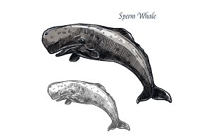 Sperm whale vector isolated sketch icon