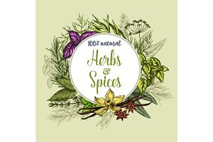 Vector poster of spices and herbs seasonings