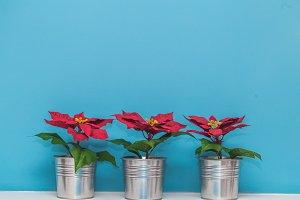beautiful Christmas pot