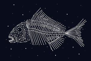 Constellation skeleton fish