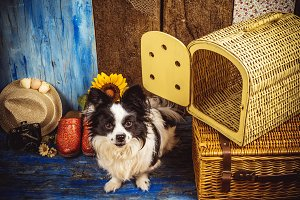 Small dog with wicker cage