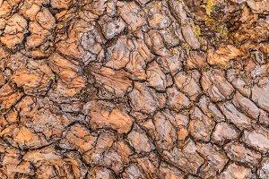 tree bark texture pattern