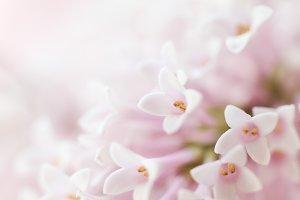 Beautiful Flower Background. Pink