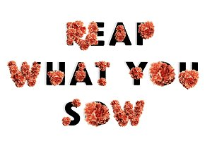Reap What You Sow Flowers