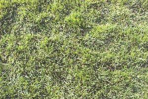 Fluffy Grass I