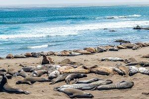 Sea Elephants siesta