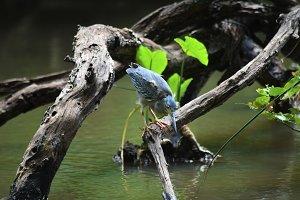 A skilled fisherman