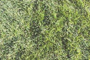 Fluffy Grass II