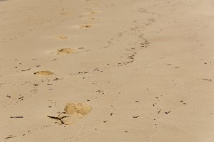 Footprints in the beach sand