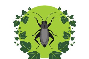 Cricket and Ivy Vector Illustration
