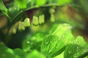 spring flower buds and leaf with rain drops close up photo