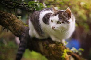 cute cat on the apple tree