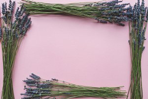 Frame of lavender flowers on pink background