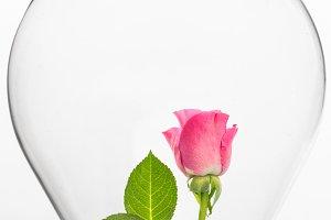 Rose inside light bulb