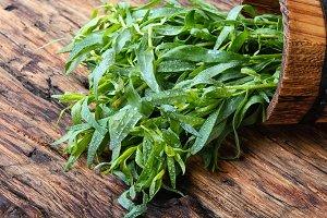 plant fresh tarragon