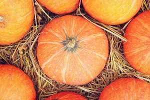 Pumpkins on rice straws
