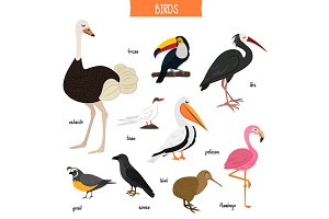 Bird set isolated vector illustration