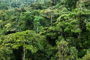 rainforest in Malaysia