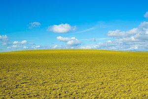 A yellow landscape
