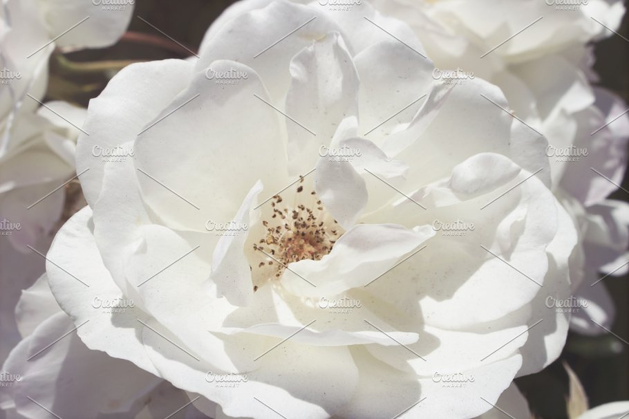 Large white flowers gallery flower decoration ideas large white flowers mightylinksfo