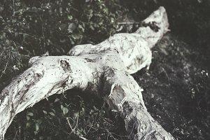 The Dry Tree Bark