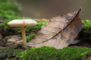 mushroom in forest