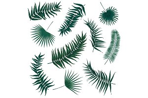 Vector tropical palm leaves, jungle leaves set isolated on white background.