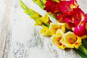 yellow and red gladiolus