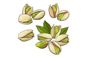 Set of hand drawn pistachio nuts, single and grouped