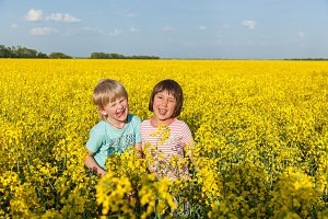 children in the field with the flowering yellow flowers of rape