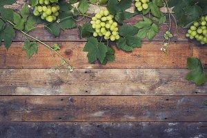 Wine / vineyard background