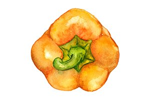 Watercolor sweet bell pepper isolate