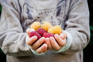 Raspberries in children hands