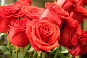 Red Colombian Roses